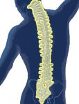 spine-melt